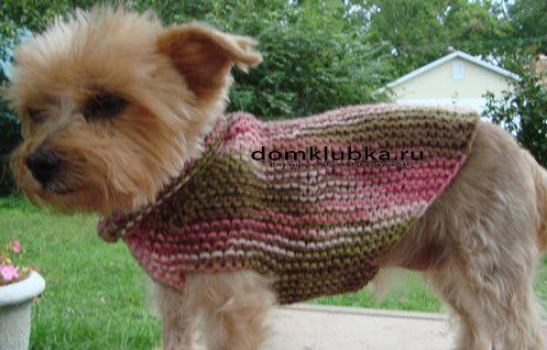 Вязанные свитера на йорков