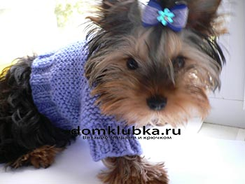 Модная фиолетовая кофта для собачки