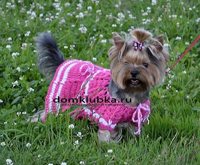 Розовое платье для девочки йорка